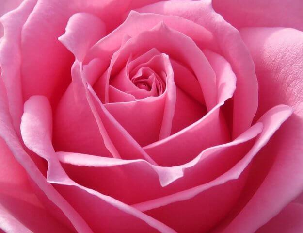 Perfumy z różą - część pierwsza - grzeczne i delikatne