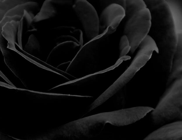 Zapachy z różą - po mrocznej stronie mocy