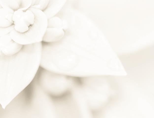 Perfumy na ślub - sezon wiosenny i letni