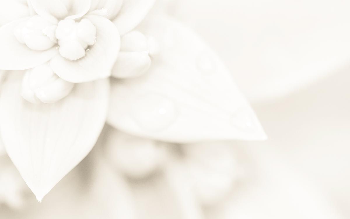 Zapachy na ślub - sezon wiosenny i letni